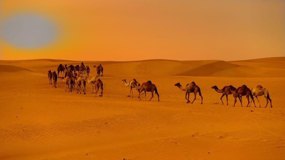 Desert Safari from Sharjah